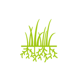 Core Aeration Service Crystal Lake Lawn Aeration Elite