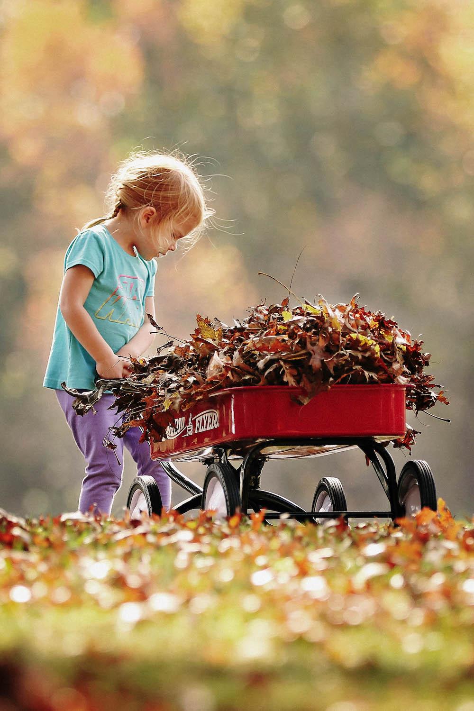 Final Fall Property & Leaf Clean Up