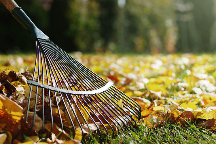 Why should my property have a Fall Leaf Clean-Up?